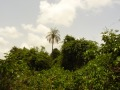 Gambia134