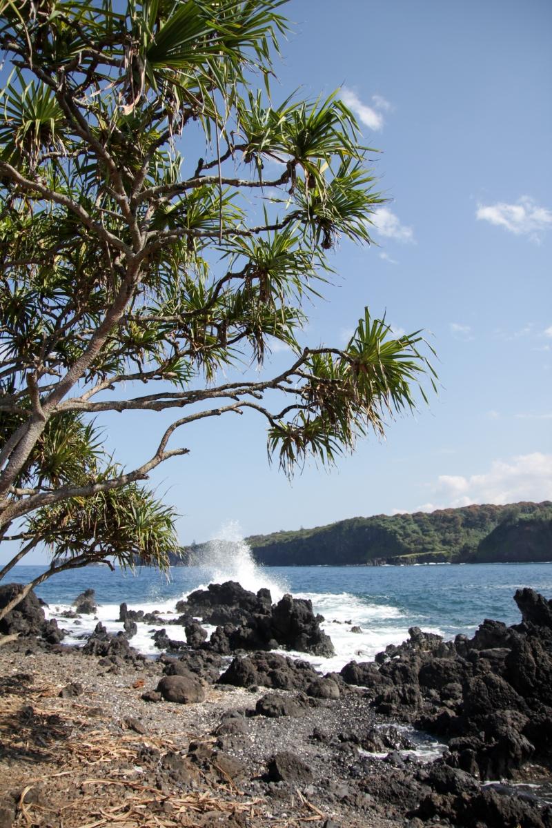 Hawaje221
