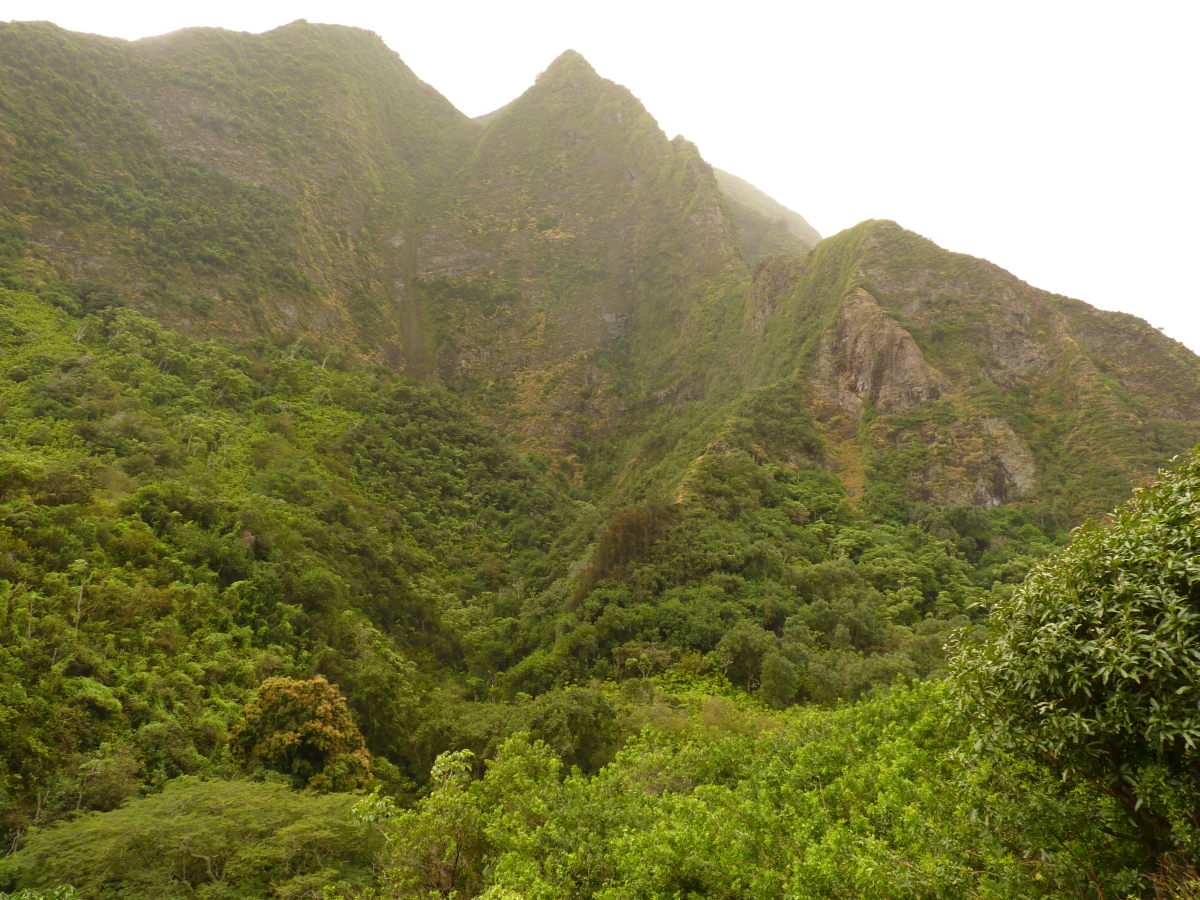 Hawaje259