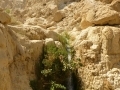 Izrael029.jpg