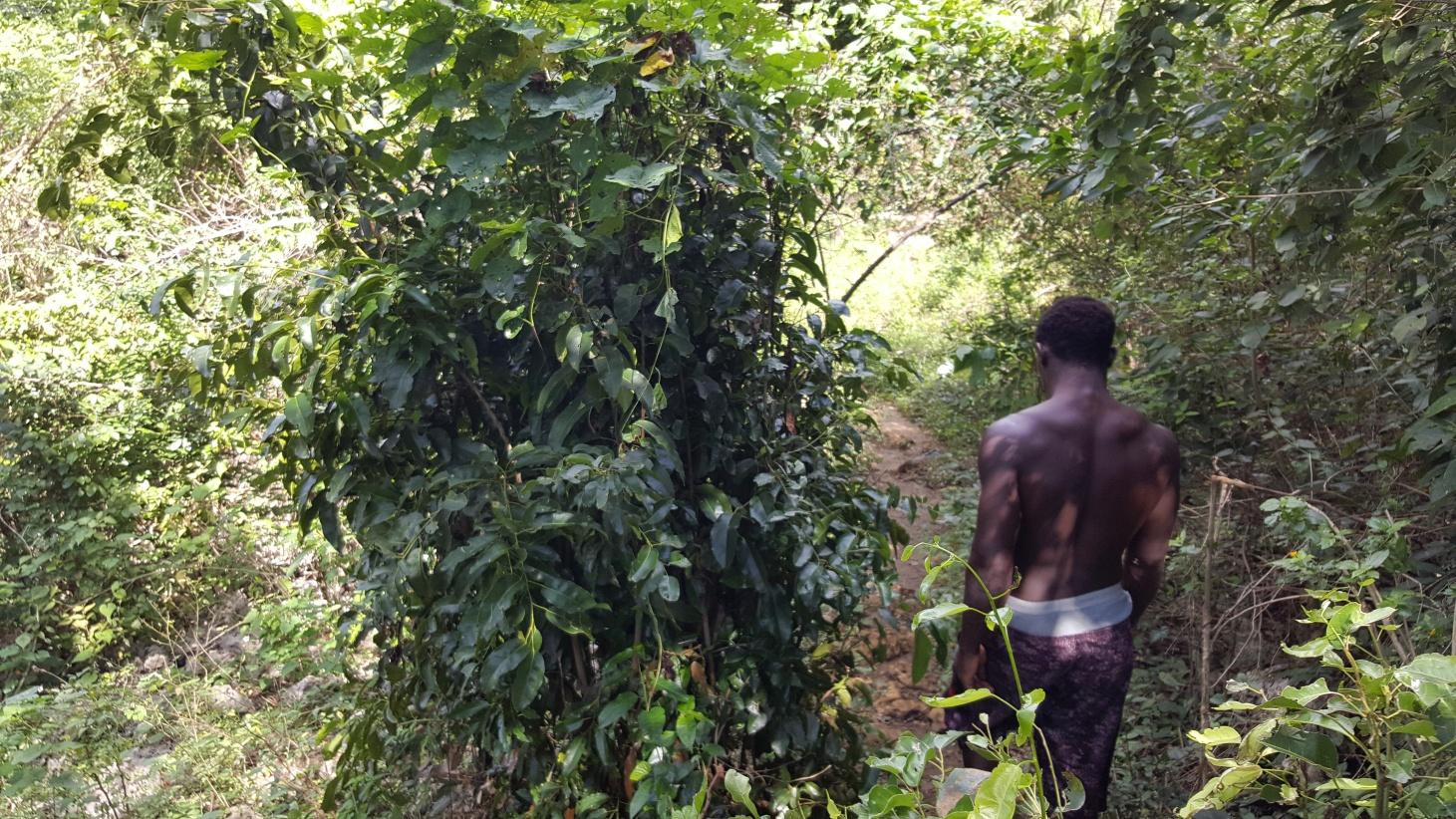 Jamajka071
