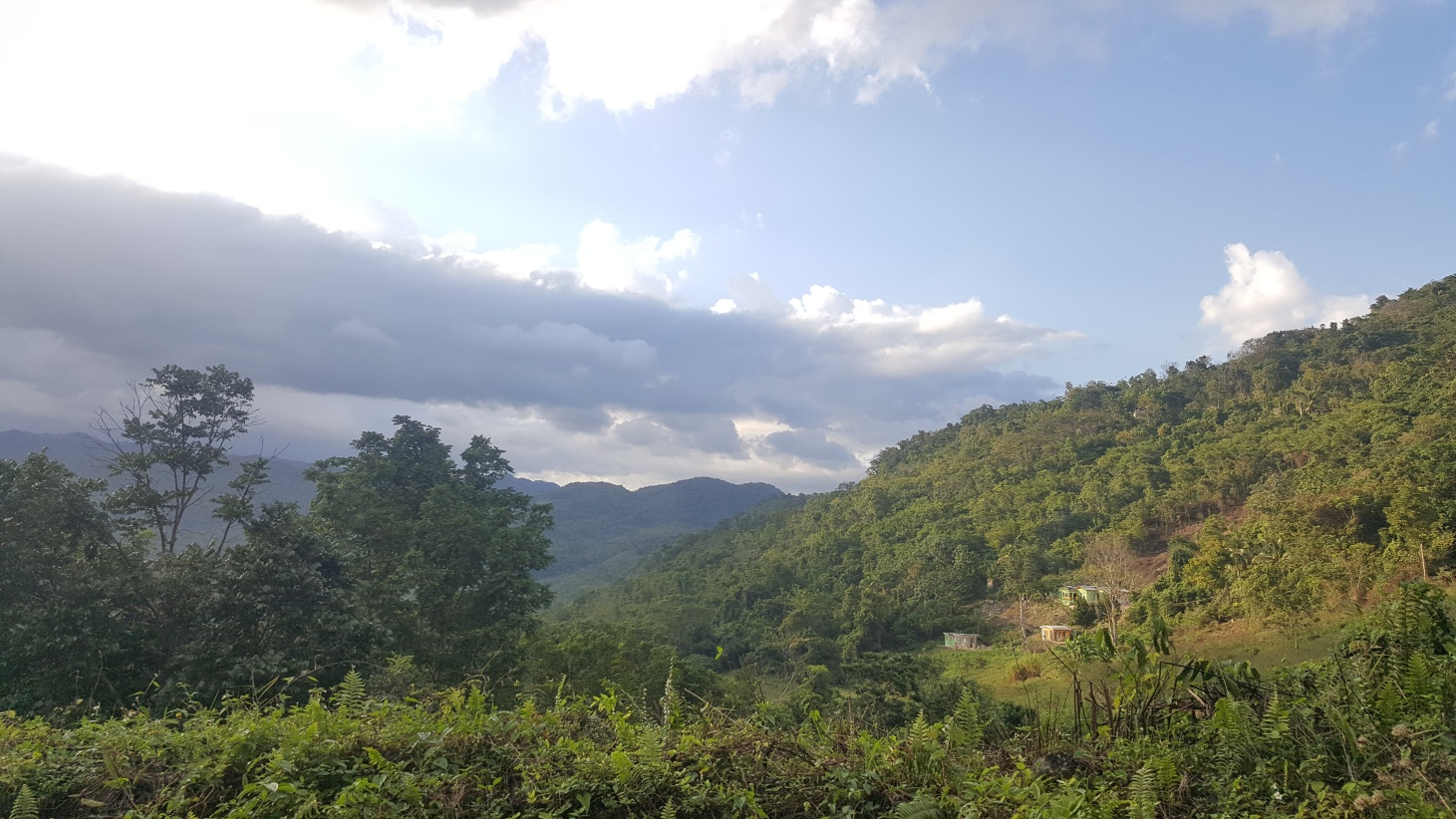 Jamajka175