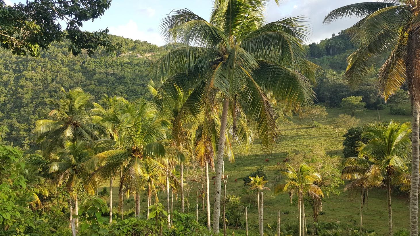 Jamajka181