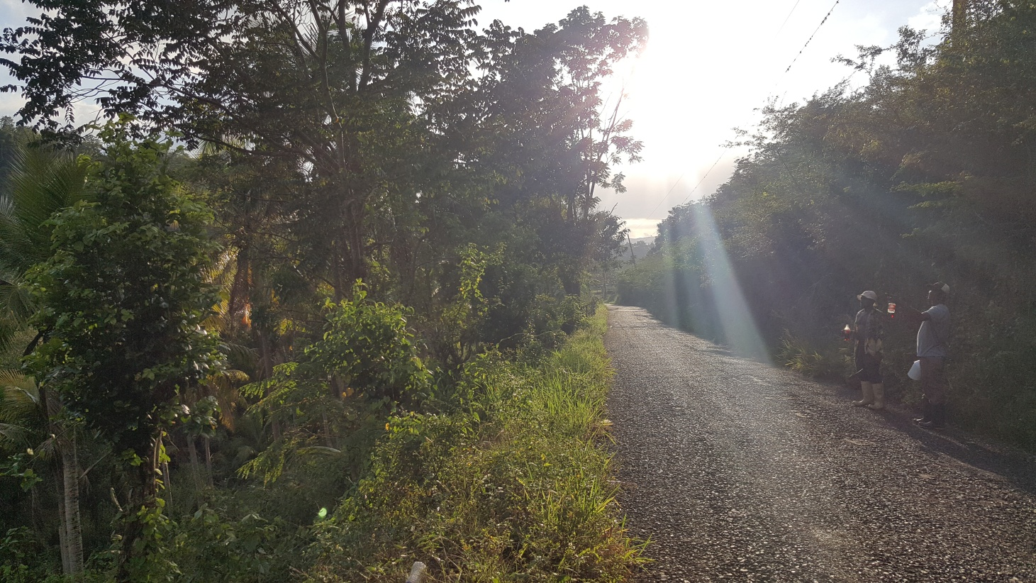 Jamajka182
