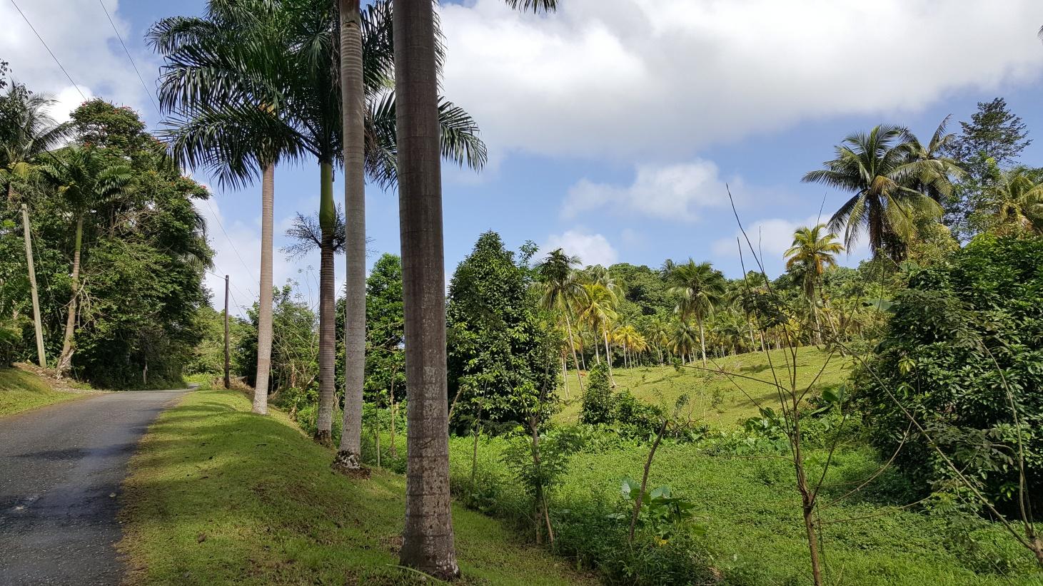 Jamajka303