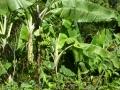 Jamajka058