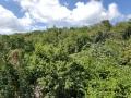 Jamajka070