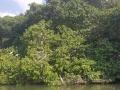 Jamajka155