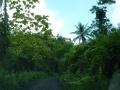 Jamajka273
