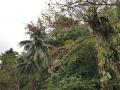 Jamajka365