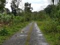 Jamajka367