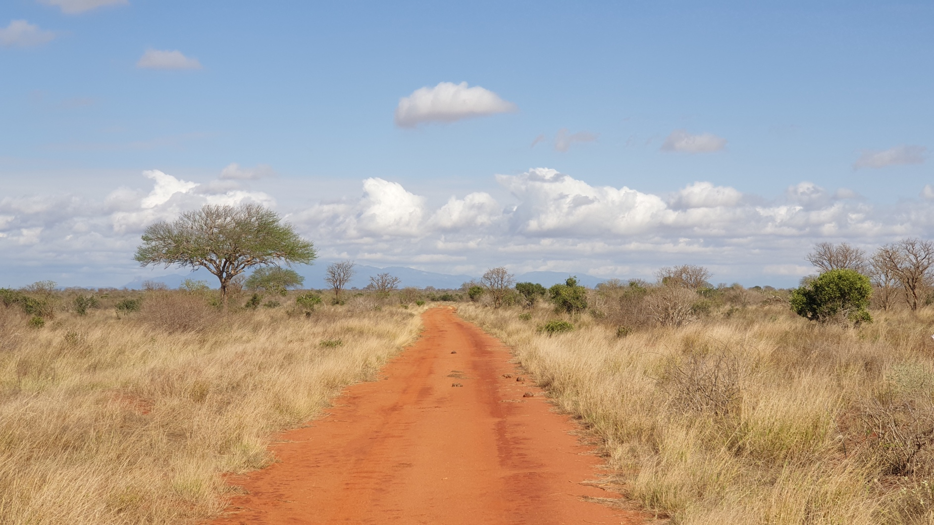 Kenia060