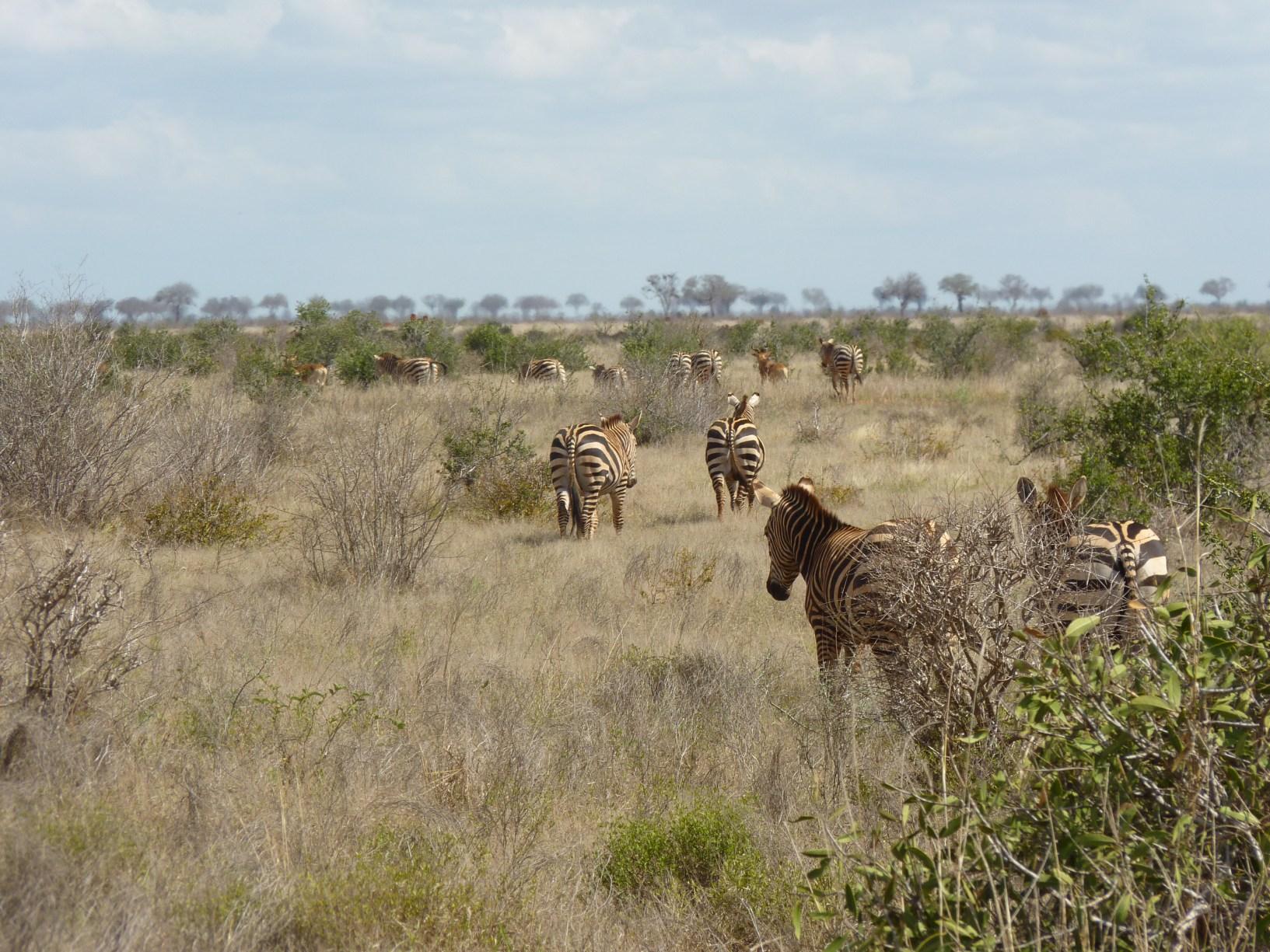 Kenia079