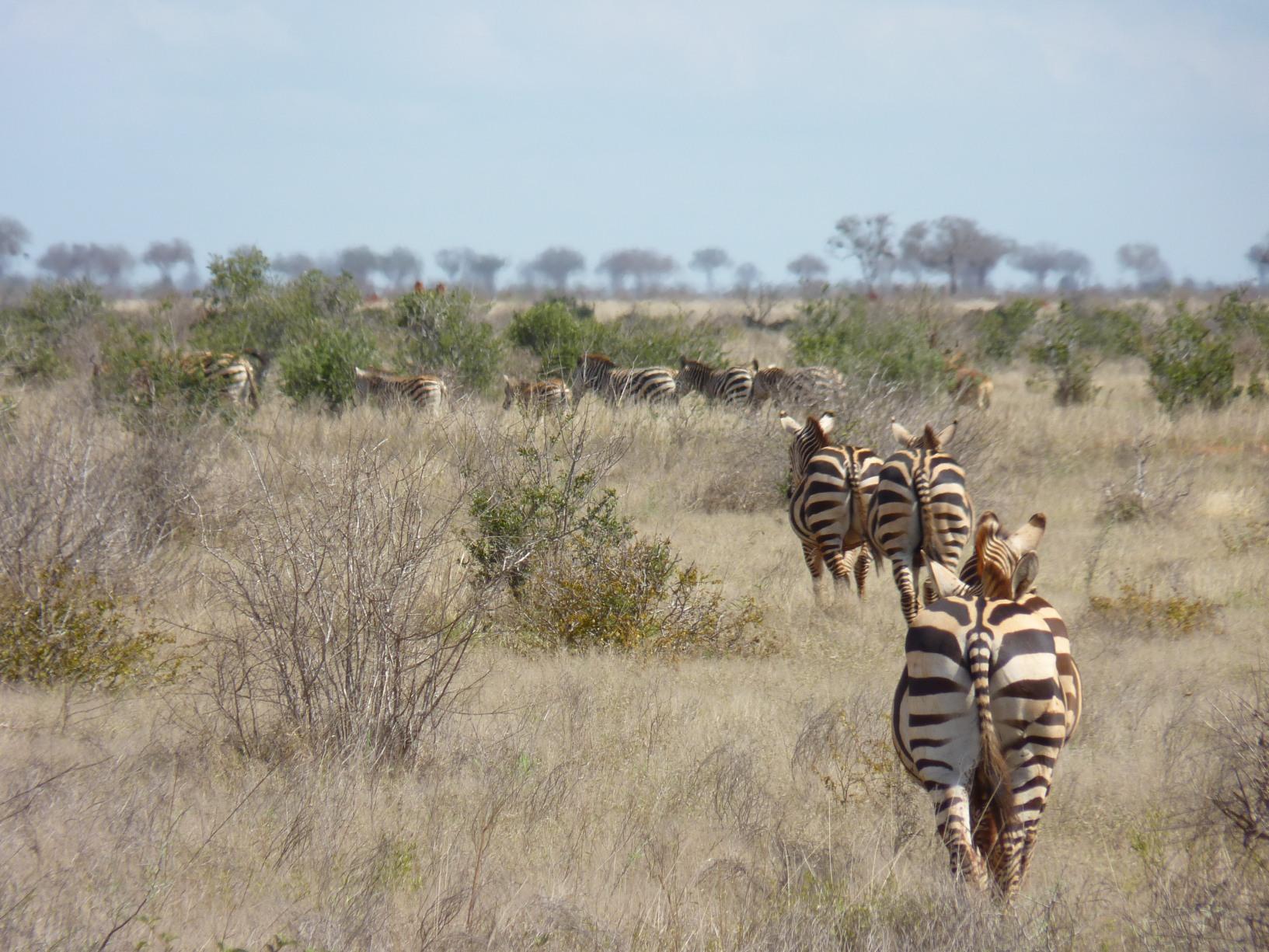 Kenia081