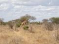 Kenia124