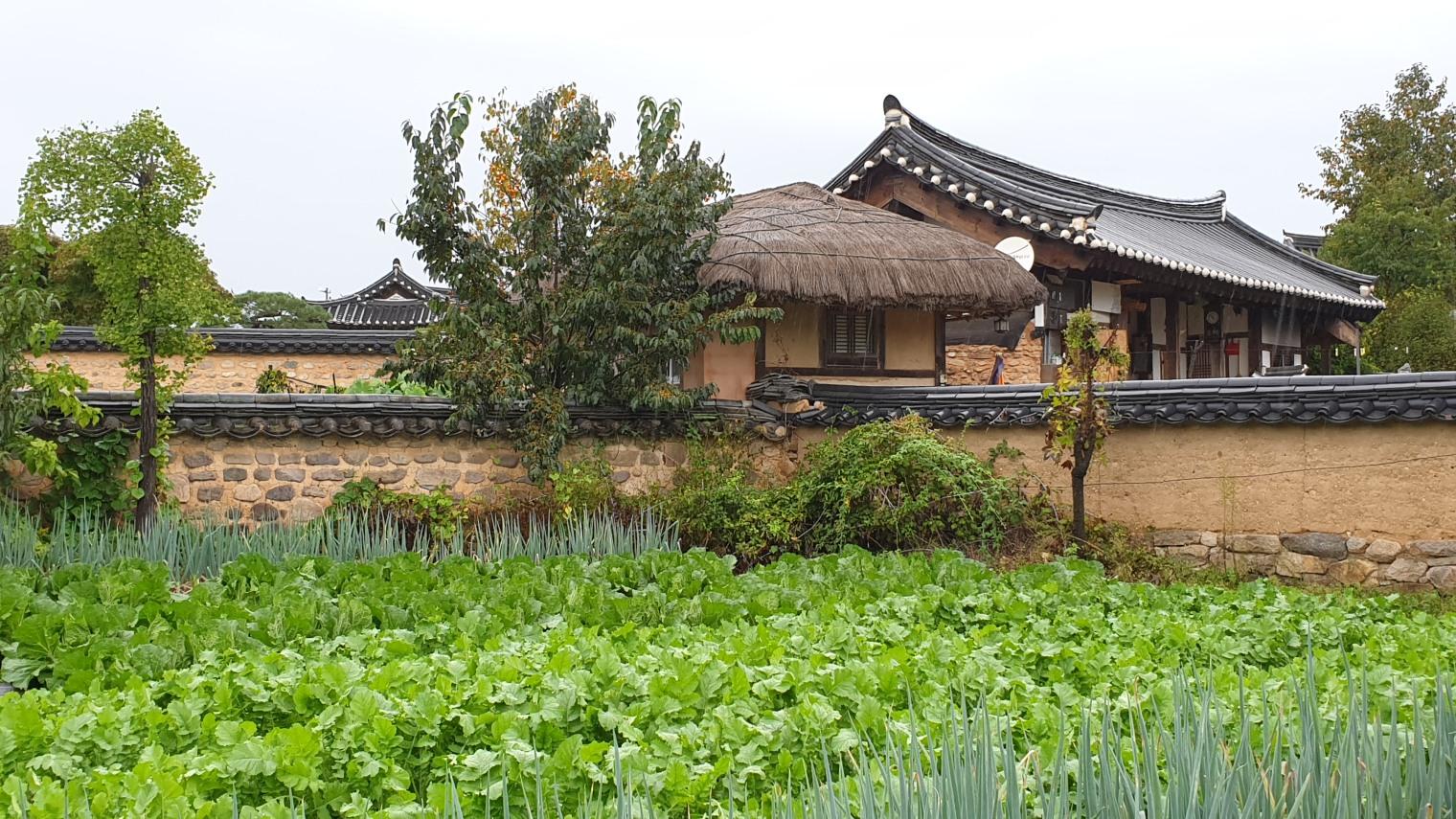 Korea0516
