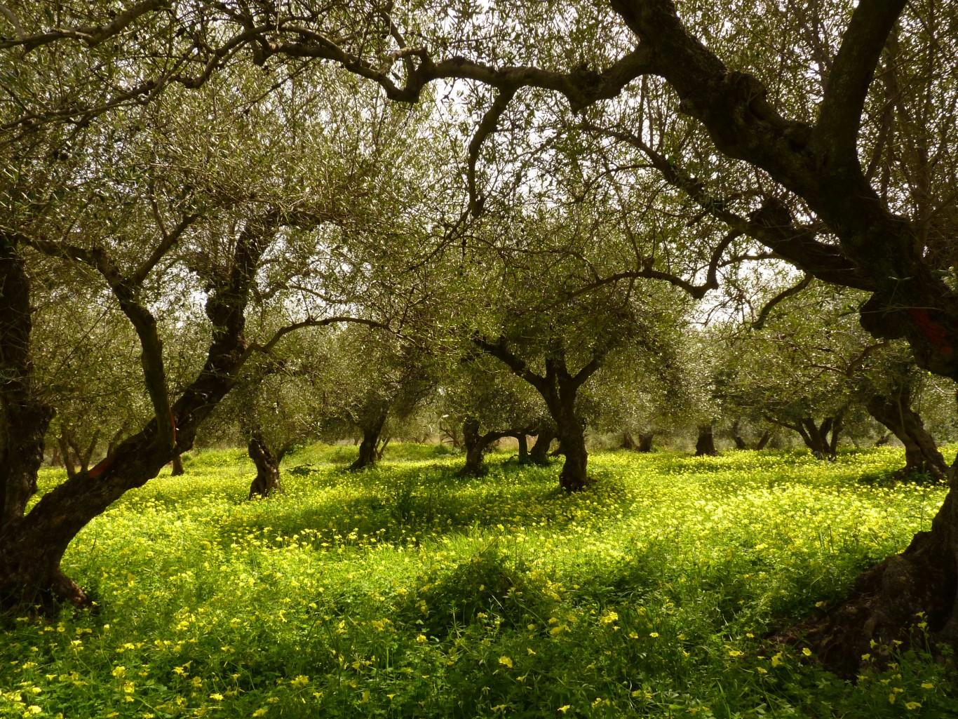 Kreta2012.030