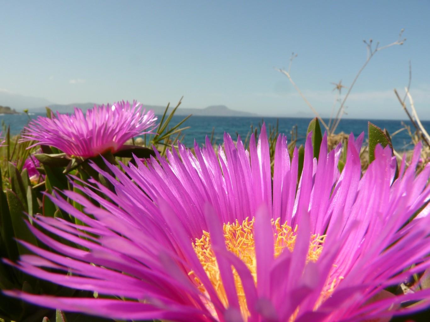 Kreta2012.080