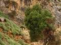 Kreta2012.094