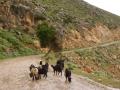 Kreta2012.098
