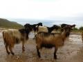 Kreta2012.104