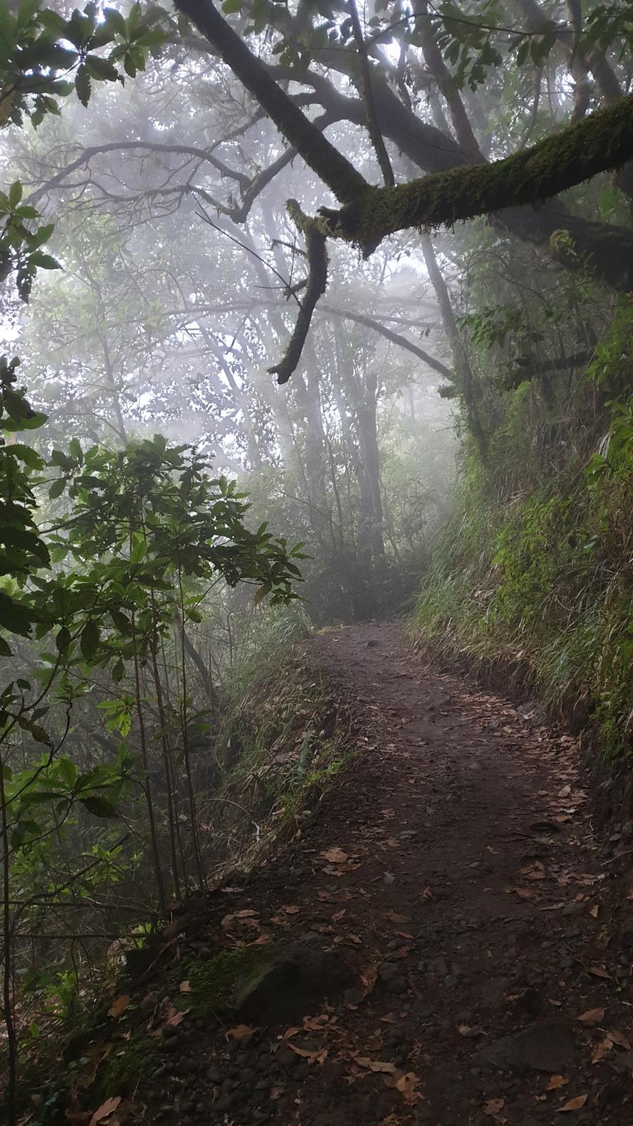Madera309