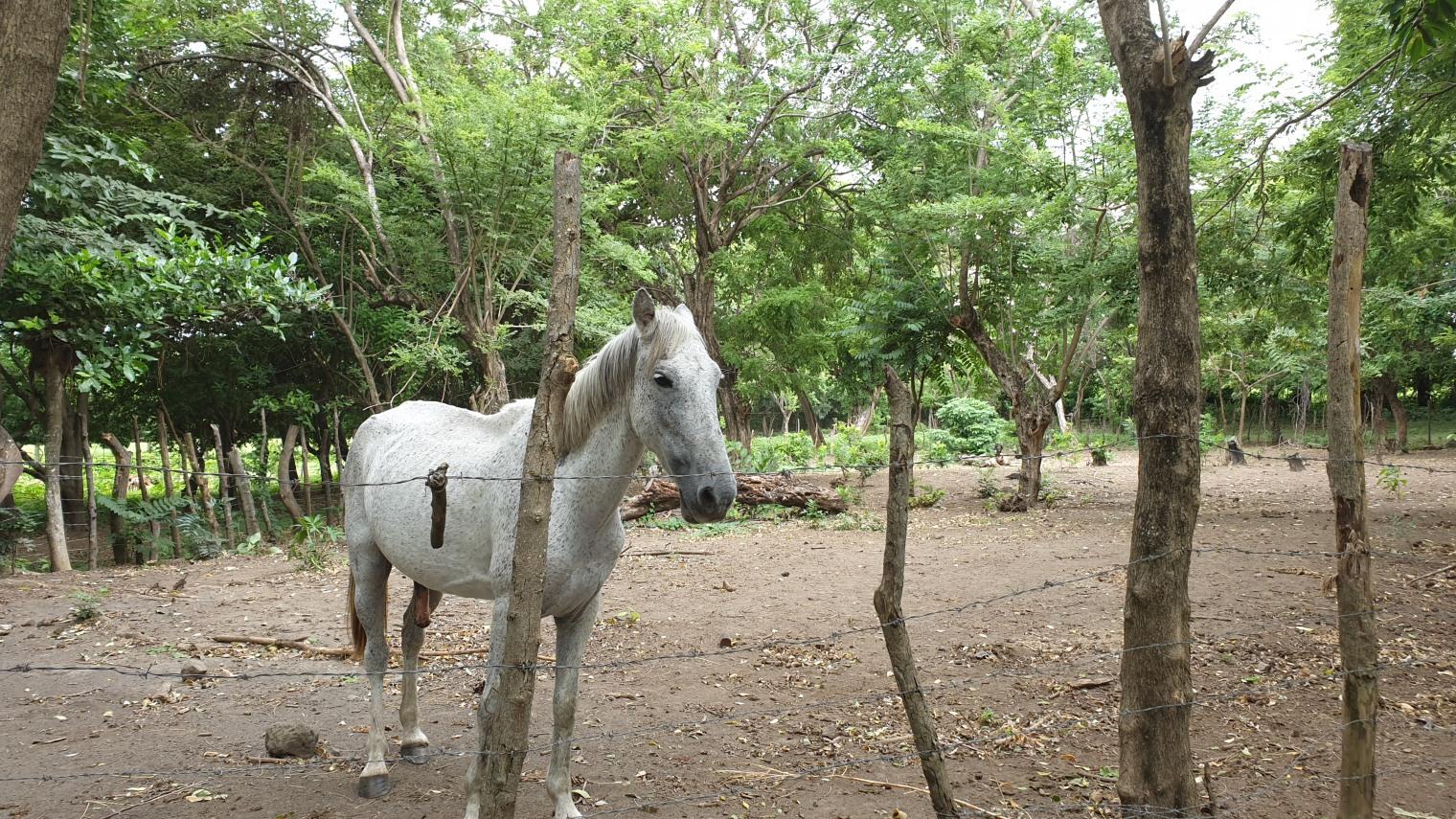 NikaraguaKostaryka299