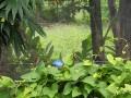 NikaraguaKostaryka303