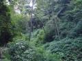 NikaraguaKostaryka418