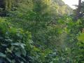NikaraguaKostaryka421