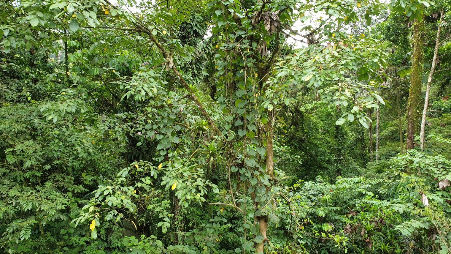 NikaraguaKostaryka534