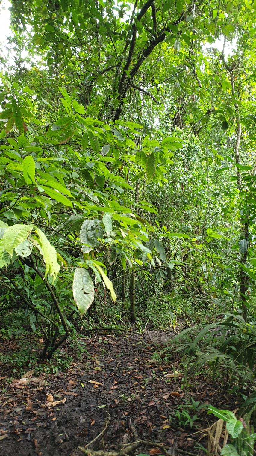 NikaraguaKostaryka629