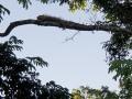 NikaraguaKostaryka598