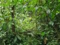 NikaraguaKostaryka633