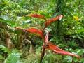NikaraguaKostaryka636