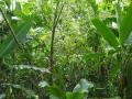 NikaraguaKostaryka681