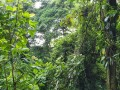 NikaraguaKostaryka746