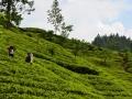SriLanka29.jpg