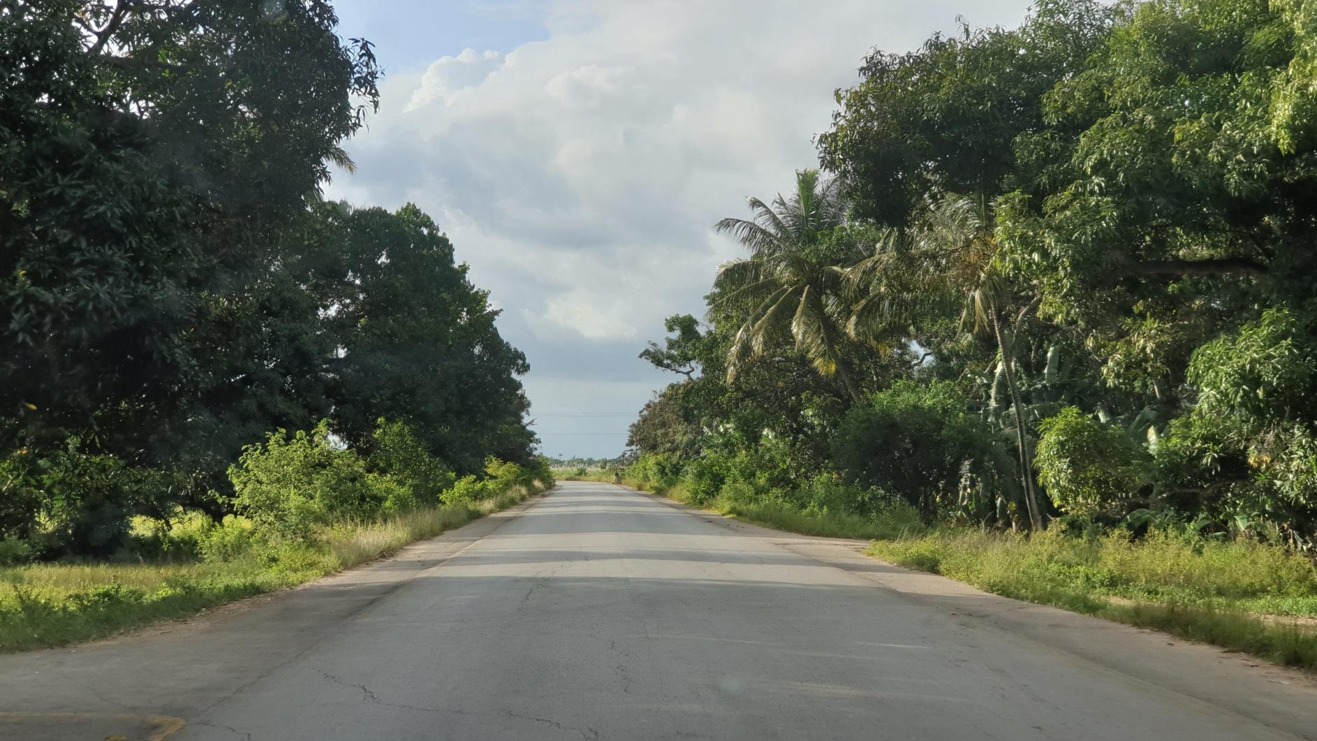 Zanzibar211