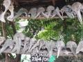 Zanzibar234
